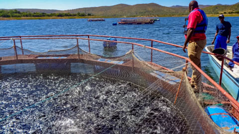 Multiknit International - Aquaculture Netting